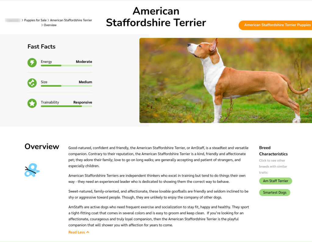 American Staffordshire Terrier Breed Overview Landing Page